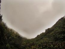 Cloudforest Excursion